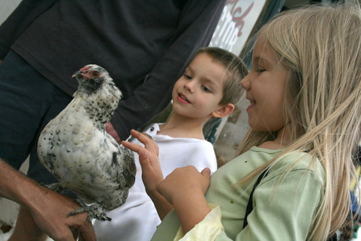 Chickens make great pets for children as well as providing eggs, fertiliser and pest control in the garden
