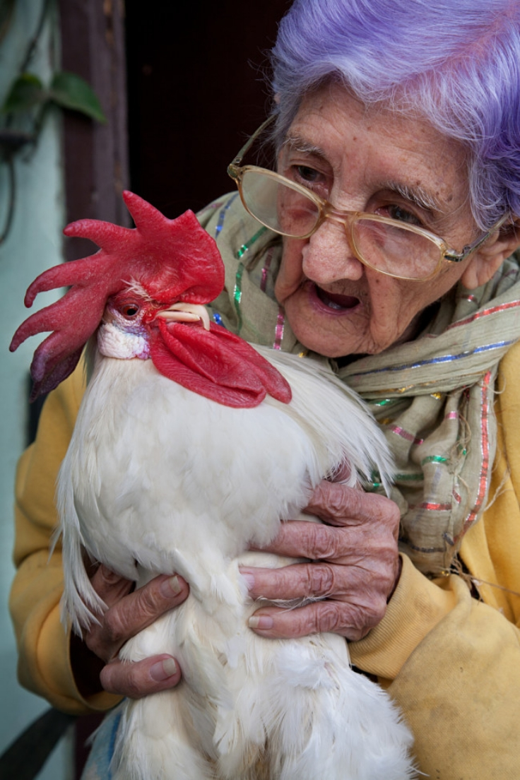 Chickens are one of few pets that can be enjoyed by all the generations in a family