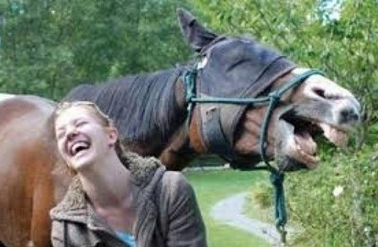 Humans tend to read too much into horse expressions that resemble those in humans